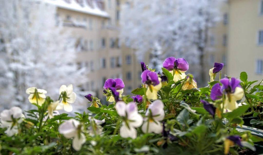 Лето на балконе: 7 идей и 1 рецепт | Блог Берлин со вкусом